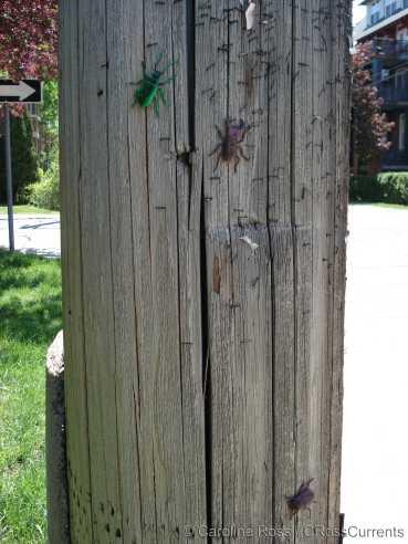 big_bugs